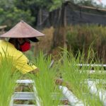 Stok Pupuk Subsidi buat Musim Tanam Aman & Terkendali Pupuk Kaltim